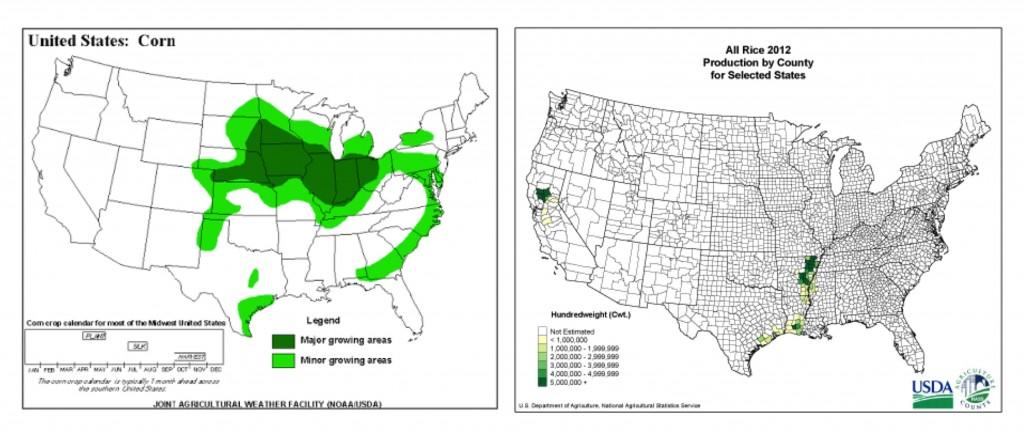 Corn and rice in U.S.